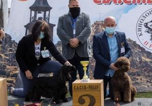 Dog Show Prilep 2021