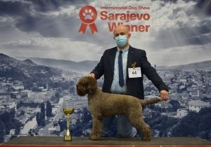 Dog Show Sarajevo 2020
