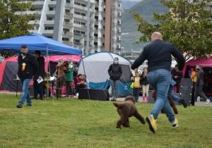 Dog Show Bar, Montenegro 2021