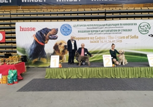 Dog Show Sofia Bugarska 2020