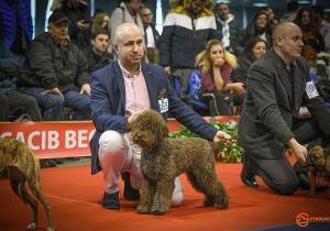Dog Show Beograd 2020